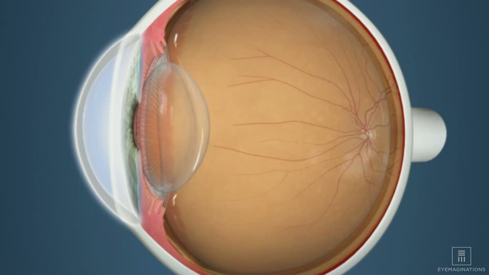Eye Anatomy Including Pupil Cornea And Lens