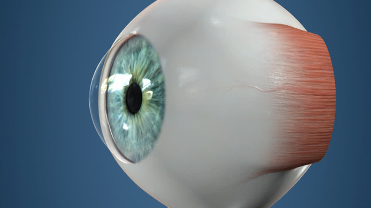 Anatomy Sclera De La Pea Eye Clinic Official Web Page
